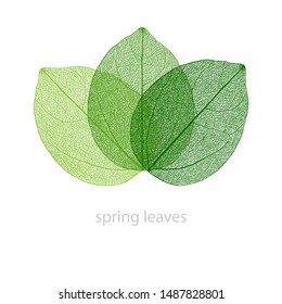 vector illustration with green colored skeleton leaves