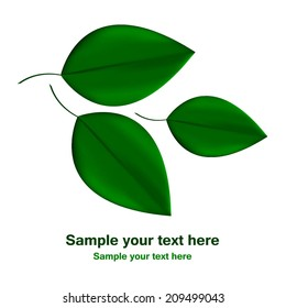Vector illustration of Green leaves on a white background