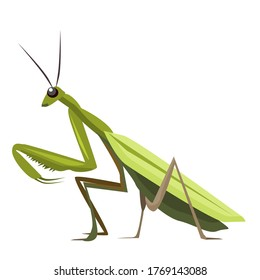 Vector illustration of a Green mantis isolated on a white background