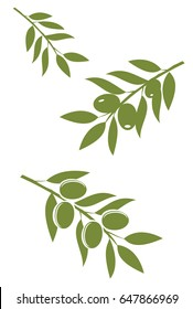 vector illustration of green olive branches isolated on white background.
