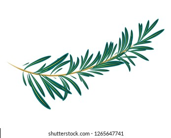 Vector illustration of green rosemary branch isolated on white background