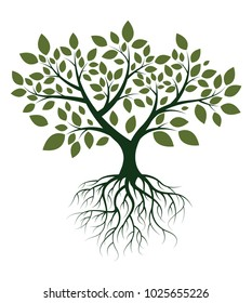 Vector Illustration : Green Tree with Roots