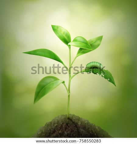 Vector illustration of green young sprout growing in soil. Isolated on background