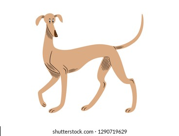 Vector illustration of a greyhound breed dog, cartoon style.