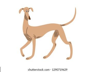 Vector illustration of a greyhound breed dog, cartoon style.
