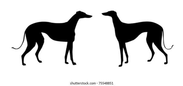 vector illustration greyhound on white background