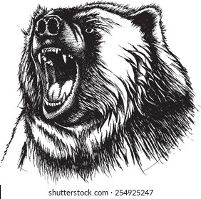 Vector Illustration of growling Bear. Original pen and ink vectorized. Angry Bear