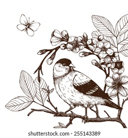 Vector illustration with hand draw bird on blooming tree twig. Vintage sketch isolated on white