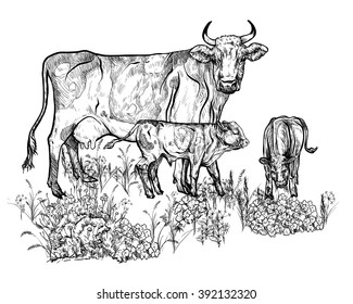 Vector illustration. Hand drawing on a graphic tablet.Cow and calf in the pasture.
