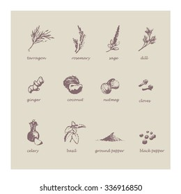 Vector illustration. Hand drawing style. Sketch with set of spices.