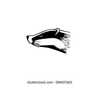 Vector illustration of hand drawn badger's head. Ink drawing, graphic style. Beautiful design elements.