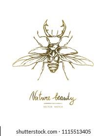 Vector illustration. Hand drawn beetle. Print design element . Chalk style vector.