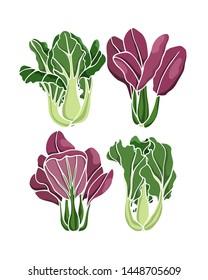 Vector illustration of hand drawn bok choy. Ink drawing, beautiful vegetarian design elements.