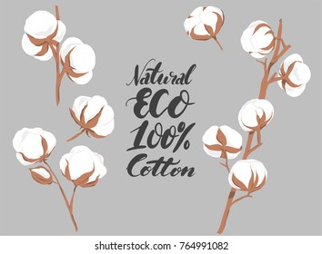 vector illustration of hand drawn cotton flowers with text on gray background
