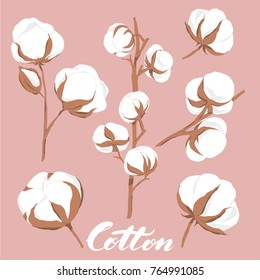 vector illustration of hand drawn cotton flowers with text on pink background