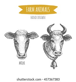 Vector illustration of hand drawn cows portraits, isolated on white background. Farm animals collection.