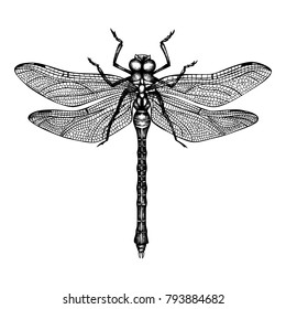 Vector illustration of hand drawn dragonfly. Vintage insects sketch collection. Spring design template.