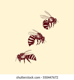 Vector illustration of hand drawn honey bee group made in retro style. Beautiful ink drawing