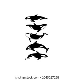Vector illustration of hand drawn killer whale group. Beautiful ink drawing, heavy contour. Perfect design elements, marine animal illustration
