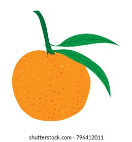 Vector illustration. Hand drawn Mandarine, clementine, citrus.