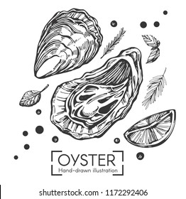 Vector illustration with hand drawn oysters on the white background