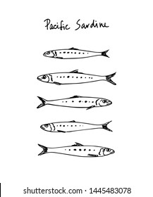 Vector illustration of hand drawn Pacific sardines. Ink drawing, graphic style. Beautiful food design elements