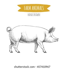 Vector illustration of hand drawn pig, isolated on white background. Farm animals collection.