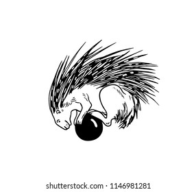 Vector illustration of hand drawn porcupine balancing on the ball. Beautiful ink drawing, funny illustration
