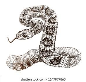 Vector illustration. Hand drawn realistic sketch of western diamondback rattlesnake, isolated on white background