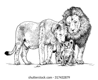 Vector illustration. Hand drawn realistic sketch of a family of lions, isolated on white background