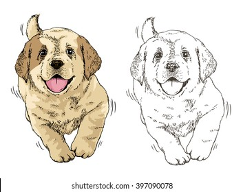Vector illustration. Hand drawn realistic sketch of cute puppy dog runs happily