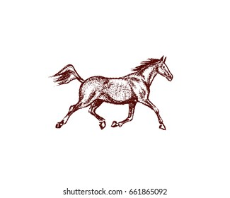 Vector illustration of hand drawn running thoroughbred horse. Beautiful design elements, charcoal drawing