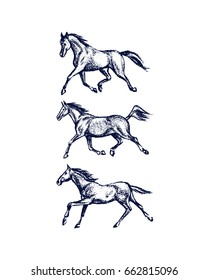 Vector illustration of hand drawn running thoroughbred horses. Beautiful design elements, charcoal drawing