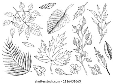Vector illustration of hand drawn set of sketch leaves. Ink leaf. Retro and vintage style. Spring, Autumn, Fall or Summer leaves.