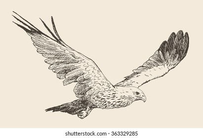 Vector illustration. Hand drawn sketch of a eagle in flight