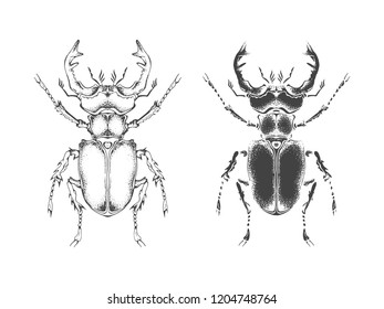Vector illustration with hand drawn stag beetle. Two variants of insect: outline and silhouette. In realistic style. Isolated on withe background.
