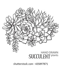 Vector illustration of hand drawn succulent plants. Black and white graphic for print, coloring book. Isolated on white background.