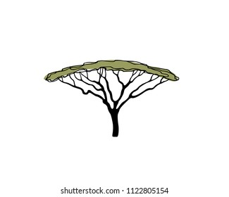 Vector illustration of  hand drawn Umbrella Thorn Acacia. Beautiful design elements, ink drawing, logo template