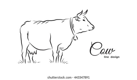 Vector illustration: Hand-drawn isolated Cow on white background. Line design