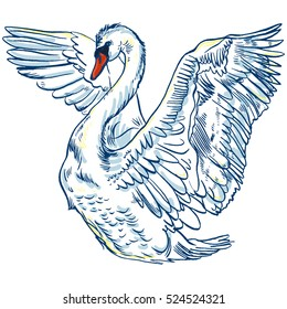 Vector illustration with handdrawn Swan