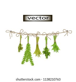 Vector illustration of hang greens fresh herbs dried, decor on the wall for kitchen or pantry, supplies for winter harvest of seasonings Basil and rosemary.