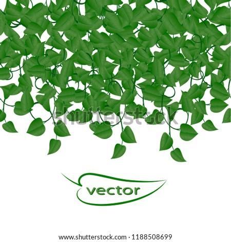 vector illustration hanging climbing vines green stock vector