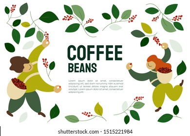 Vector illustration of happy pickers are harvesting ripe red berries of coffee from branches of trees. Coffee beans template for farmer, roasters company. Design for banner, book, flyer, print, poster