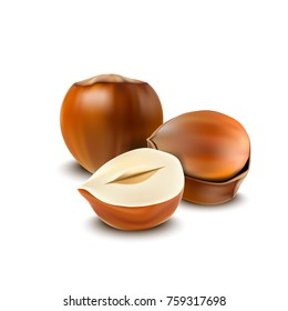 Vector illustration of Hazelnuts isolated on white background