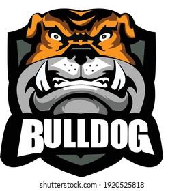 Vector illustration head ferocious bulldog mascot, on a white background
