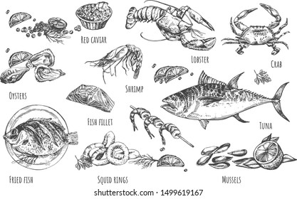 Vector illustration of healthy seafood natural set. Oysters, red caviar, shrimp, lobster, crab, fried fish, salmon fillet, squid rings, mussels, tuna, lemon wedges. Vintage hand drawn style.