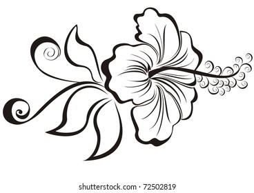 vector illustration hibiscus