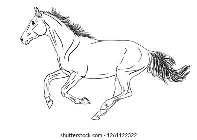 Vector illustration of a horse running gallop isolated on white background