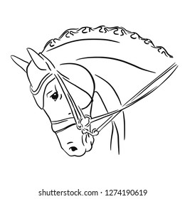 Vector illustration of a horse's head
