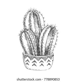 Vector illustration of houseplant. Vintage handdrawn illustration of cactus in pot with ethnic ornament isolated on white.